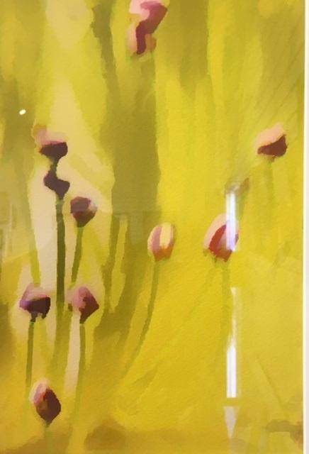Tulip Dreams Paul Lawrence