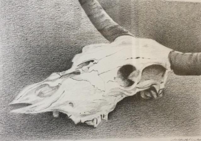 Skull Jacqueline Price