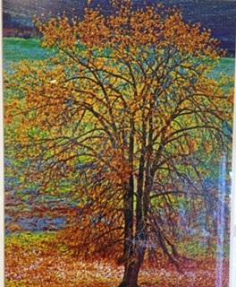 Autumn - Maureen Perkins